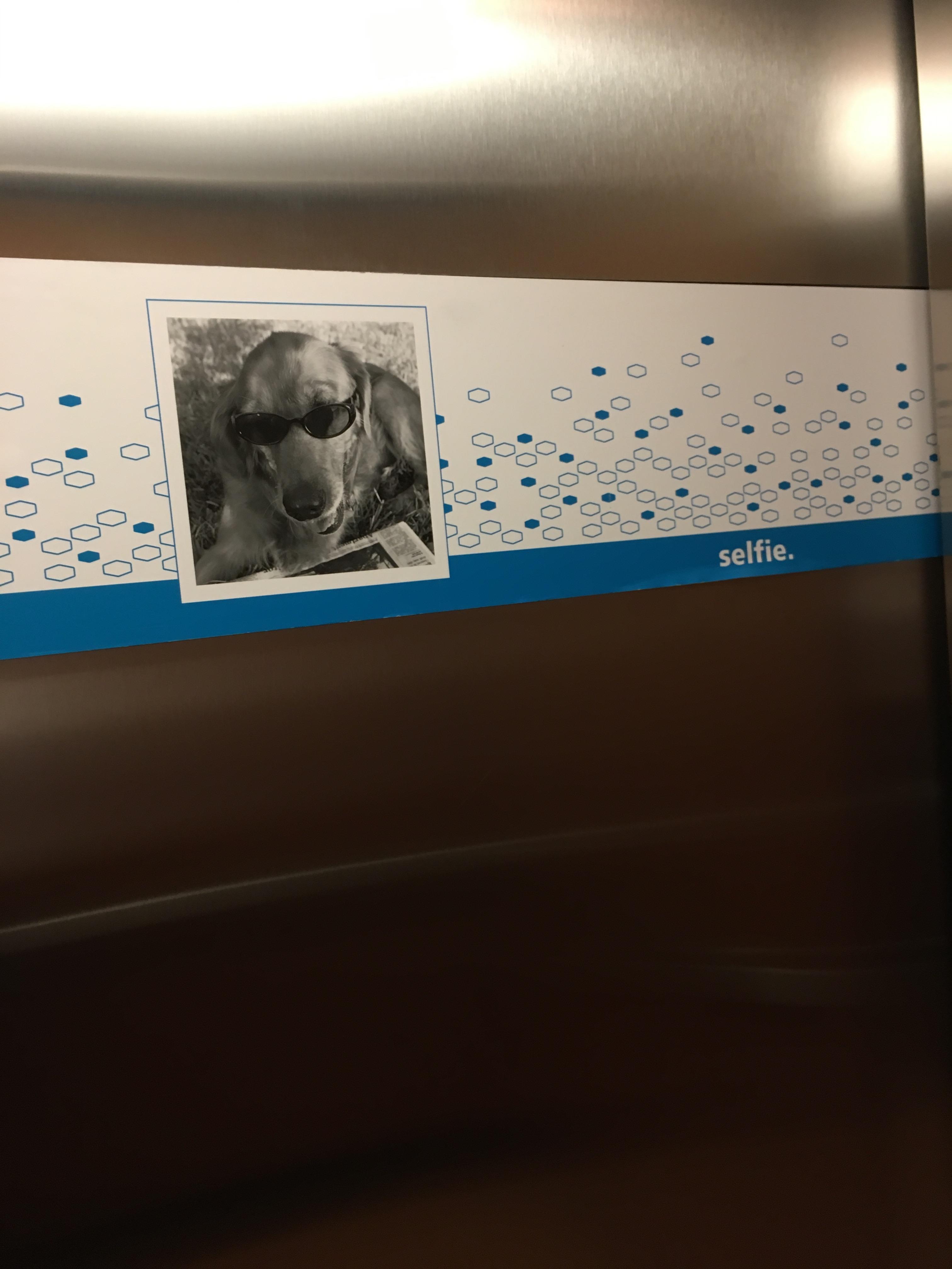 elevator5
