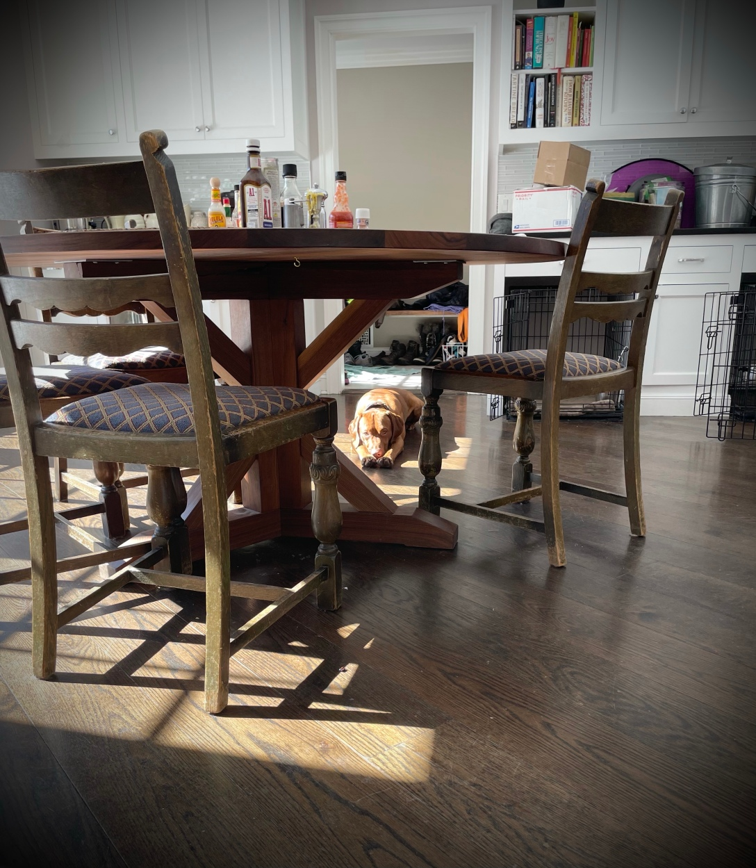 Vizsla in the kitchen, seen through the chairs