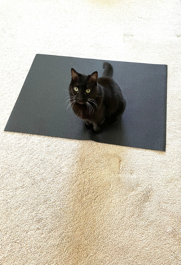 cat sitting on yoga mat